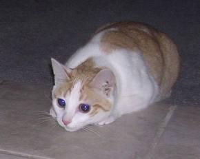 CJ kitten