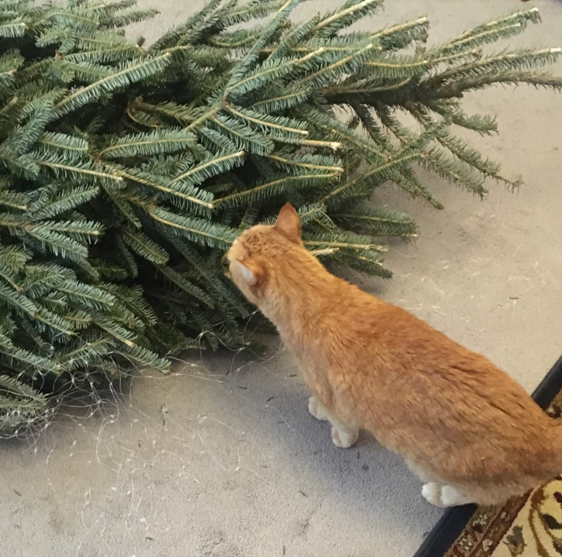 Christmas tree and cat
